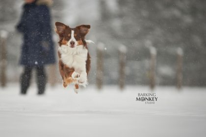 winter action dog portrait